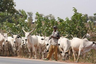 JUST IN: FG Suspends Ruga Settlements Project