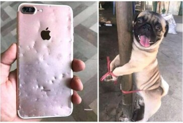 Woman Punishes Her Dog For Chewing Her Expensive iPhone (Photos)