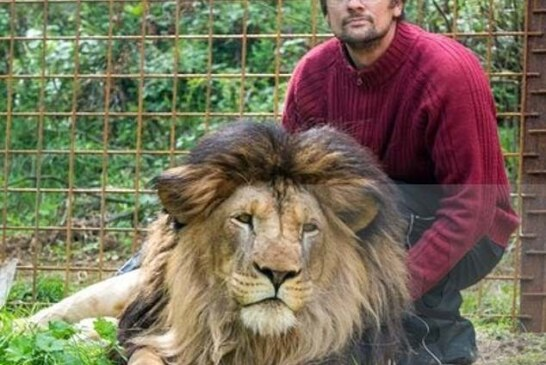 Pet Lion Mauls Owner To Death